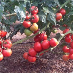 Biotechnology in Fertilization