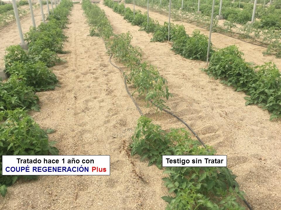 coupé regeneración plus cultivo tomates