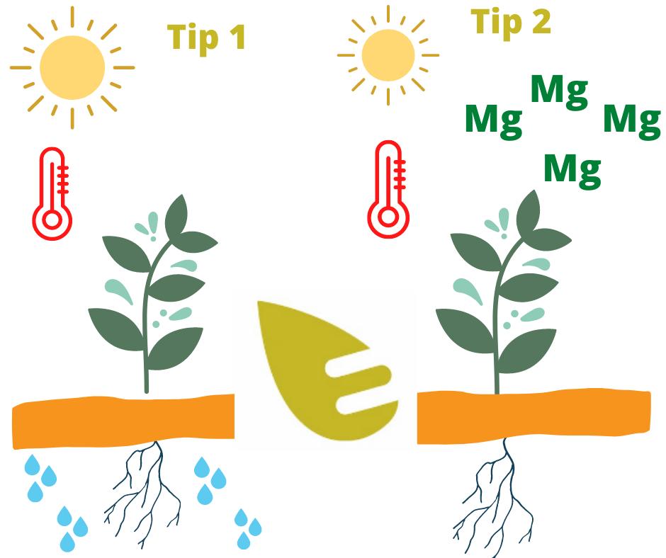 altas temperaturas cultivos calor edypro