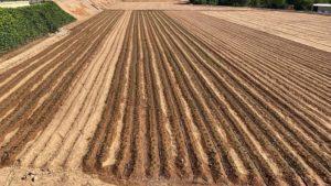 edypro humectante campo cultivo espinacas